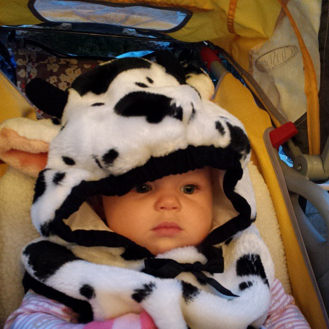 Moo! Boo at the Zoo with the family tonight.