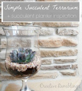 Simple succulent terrarium plus loads of succulent planter inspiration