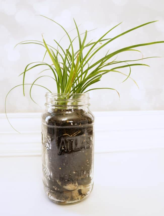 Eco-friendly Upcycled Jar Planter