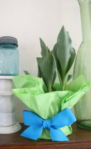 Create a pretty plant wrapper with this plant wrapping idea. Use Dollar Store tissue paper and ribbon.