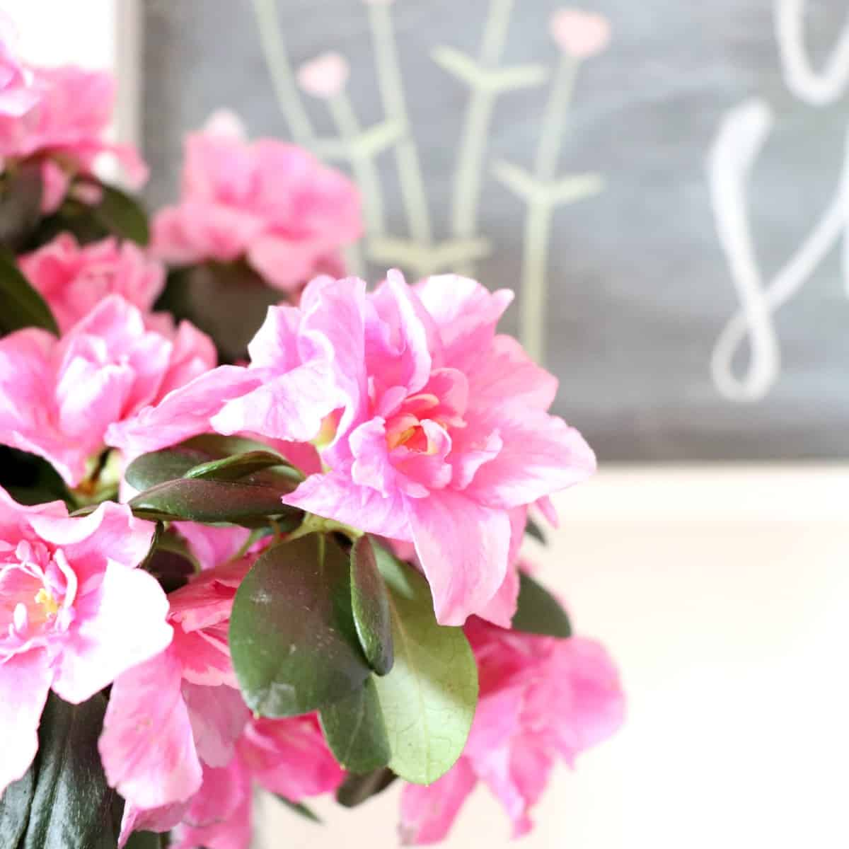 Pink flowers in coffee can planter