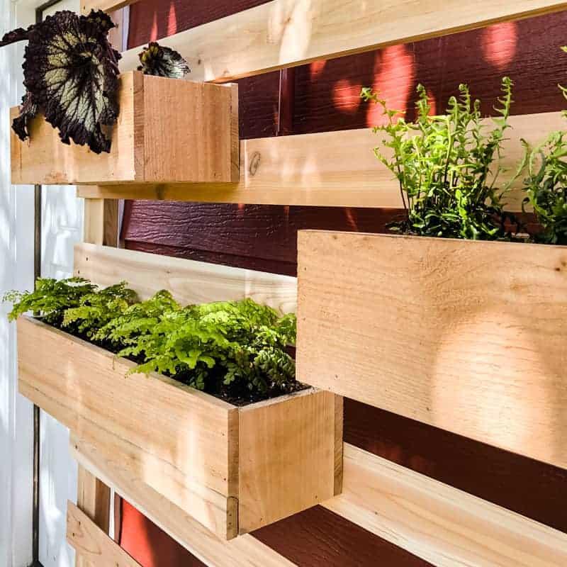 vertical-garden-plants-in-boxes